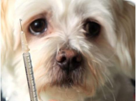 Consejos para tratar la diabetes en perros