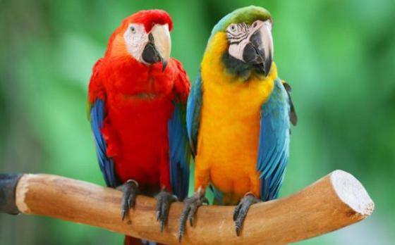 Razones por las que deberías tener un pájaro doméstico como mascota