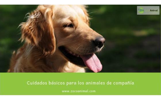 Cuidados básicos para los animales de compañía (perros y gatos)