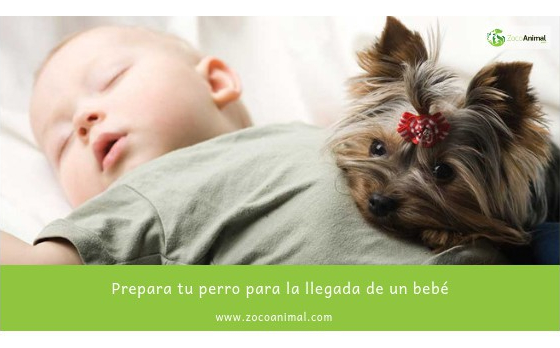 Prepara tu perro para la llegada de un bebé