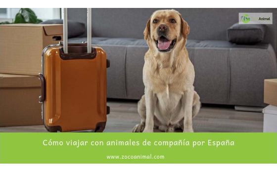 Cómo viajar con animales de compañía por España
