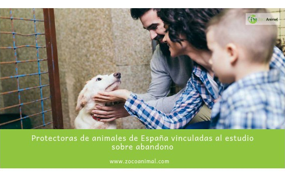 Protectoras de animales de España vinculadas al estudio sobre abandono