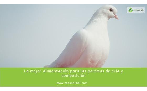 La alimentación ideal para las palomas de cría o competición