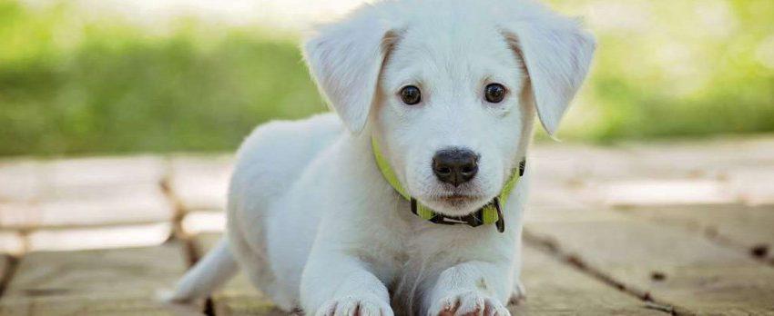 Claves en los primeros días de los cachorros