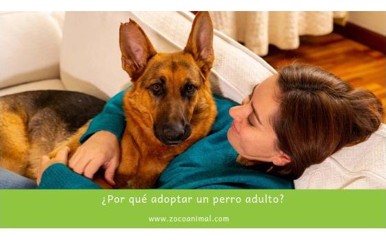 ¿Por qué adoptar un perro adulto?
