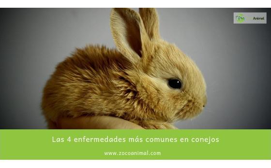 Las 4 enfermedades más comunes en conejos