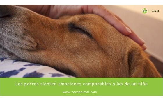 Los perros sienten emociones comparables a las de un niño