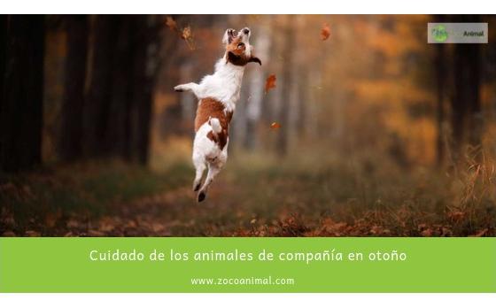 Cuidado de los animales de compañía en otoño