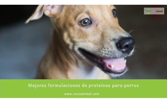 Proteínas para perros: ¿cuáles son las mejores?