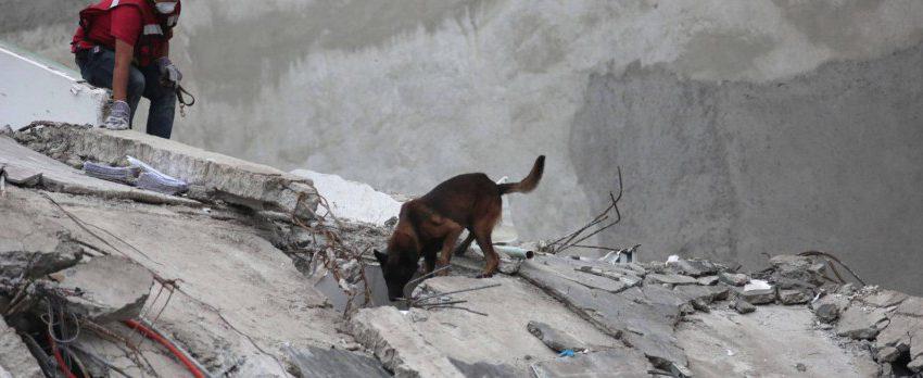 ¿Cómo salvan vidas los perros en los terremotos? ¡Jugando!