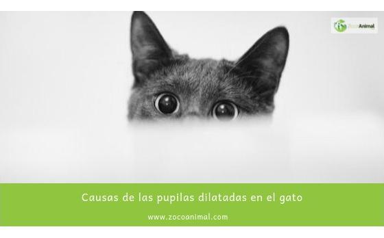 Causas de las pupilas dilatadas en el gato