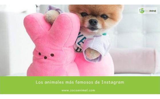 Los animales más famosos de Instagram