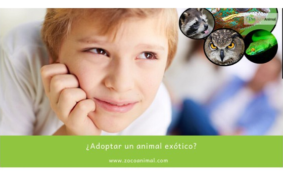 ¿Adoptar un animal exótico?
